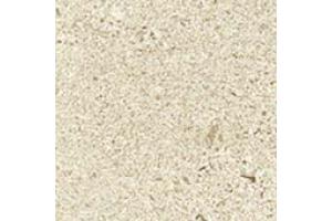 W. Ice Mist Bottone 7,2x7,2/В. Айс Мист Вставка